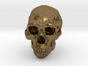Real Skull : Homo erectus (Scale 1/4) in Natural Bronze