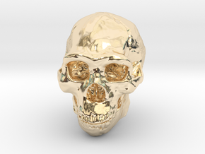 Real Skull : Homo erectus (Scale 1/4) in 14K Yellow Gold