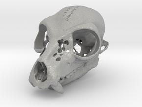 Lemur Skull in Aluminum