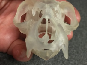 Lemur Skull in Frosted Ultra Detail