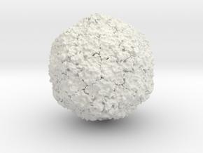 Hepatitis A Virus in White Natural Versatile Plastic
