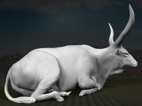 Ankole-Watusi 1:22 Lying Female 1 in White Strong & Flexible