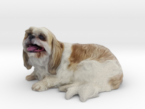 Shih Tzu 001 150mm in Full Color Sandstone