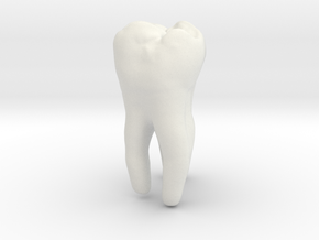 Molar Tooth 200mm-1 ---Backenzahn 200mm-1 in White Natural Versatile Plastic