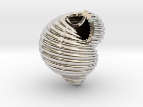 Shell n°2 in Rhodium Plated Brass