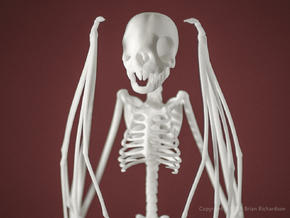 Vampire Bat Skeleton  in White Natural Versatile Plastic