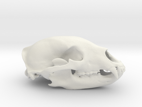Bear Skull in White Strong & Flexible