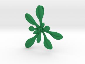 Large Arabidopsis Rosette pendant in Green Processed Versatile Plastic