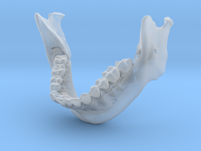 Subject 5b | Mandible + Teeth in Smooth Fine Detail Plastic