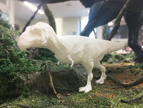 Daspletosaurus (Medium/ Large size) in White Natural Versatile Plastic: Medium