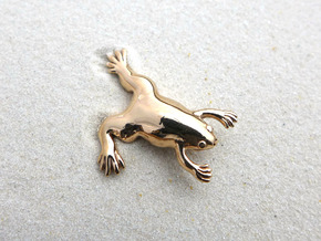Xenopus Lapel Pin - Science Jewelry in Polished Bronze