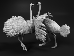 Ostrich 1:25 Fighting Pair in White Strong & Flexible