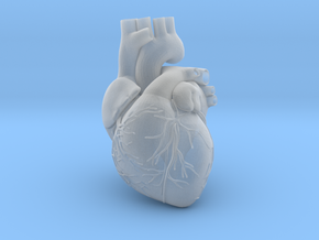 Heart Anatomical 90mm (scale is 1:1) in Smooth Fine Detail Plastic