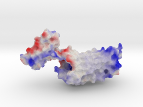 δ-Opioid Receptor in Full Color Sandstone