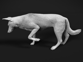 Saarloos Wolfdog 1:9 Female stalks small prey in White Strong & Flexible