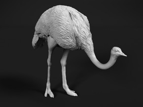 Ostrich 1:32 Head Down in White Natural Versatile Plastic