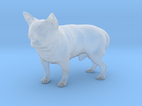 Scanned Chihuahua Dog -889 in Smooth Fine Detail Plastic