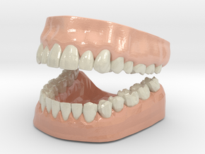 3D Teeth and Gum in Glossy Full Color Sandstone