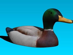 Actual Advice Mallard Duck in Full Color Sandstone