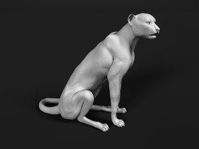 Cheetah 1:12 Sitting Male in White Natural Versatile Plastic