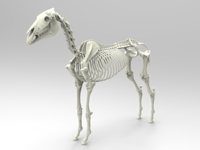 Horse Skeleton Sculpture 1:9 in White Natural Versatile Plastic