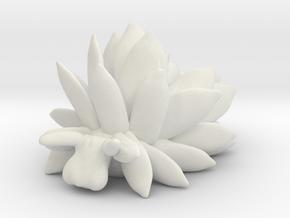 Costasiella Kuroshimae_yellow in White Natural Versatile Plastic: Small