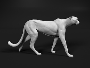Cheetah 1:35 Walking Male 1 in White Natural Versatile Plastic