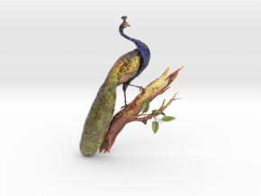 1851 Owen Jones Peacock in Glossy Full Color Sandstone