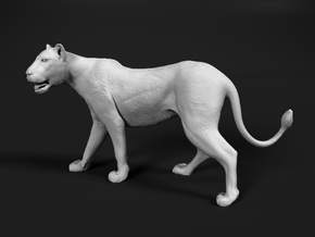 Lion 1:22 Walking Lioness 1 in White Natural Versatile Plastic