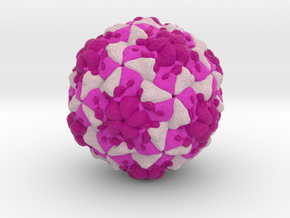 Rhinovirus Serotype 3 in Full Color Sandstone