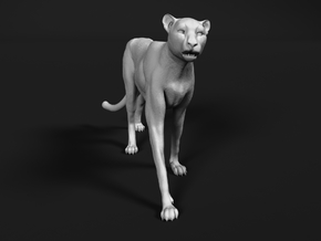 Cheetah 1:32 Walking Male 2 in White Natural Versatile Plastic