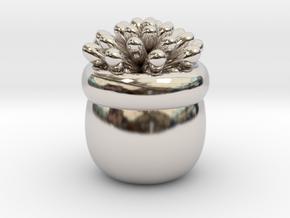 Succulent No.1 in Platinum
