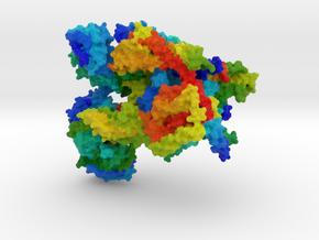 Oligosaccharyltransferase in Full Color Sandstone