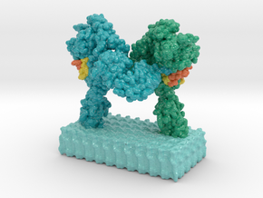 Insulin Receptor Complex 3WI4 2MFR in Glossy Full Color Sandstone: Extra Small