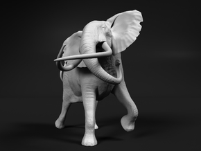 African Bush Elephant 1:72 Tusker Bull Shawu in Frosted Ultra Detail