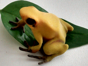 Golden Dendrobates terriblis in Full Color Sandstone