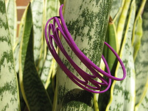 Conchoid 3 Bangle in Purple Processed Versatile Plastic