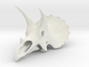 Triceratops skull - dinosaur model in White Natural Versatile Plastic: 1:24