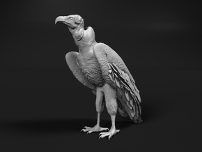 Lappet-Faced Vulture 1:72 Standing in Smooth Fine Detail Plastic