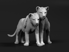 Lion 1:6 Cubs distracted while playing in White Natural Versatile Plastic