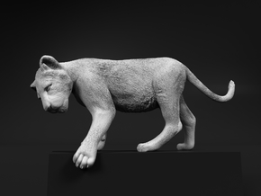 Lion 1:9 Cub reaching for something in White Natural Versatile Plastic