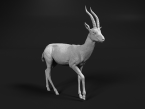 Thomson's Gazelle 1:76 Walking Male in Smooth Fine Detail Plastic