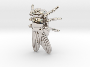 Drosophila Fruit Fly Pendant - Science Jewelry in Rhodium Plated Brass