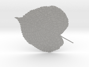 Tilia tree leaf (linden leaf) in Aluminum