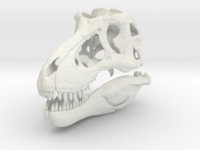 Tyrannosaurus skull - dinosaur model in White Natural Versatile Plastic: 1:12