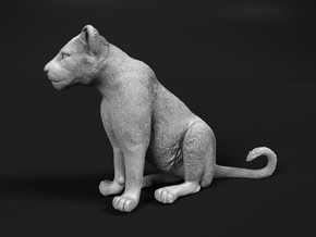 Lion 1:64 Sitting Cub in Smooth Fine Detail Plastic
