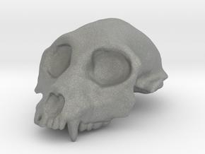 Aegyptopithecus zeuxis Cranium (1:1 Scale) in Gray PA12
