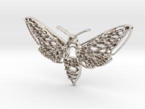 Hawkmoth in Rhodium Plated Brass