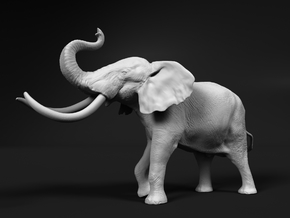 African Bush Elephant 1:35 Aggressive Male in White Natural Versatile Plastic