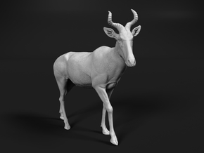 Coke's Hartebeest 1:22 Walking Male in White Natural Versatile Plastic